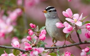 Primavera uccellino